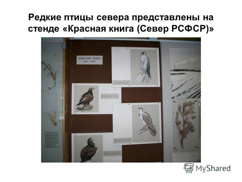 Редкие птицы севера представлены на стенде «Красная книга (Север РСФСР)»