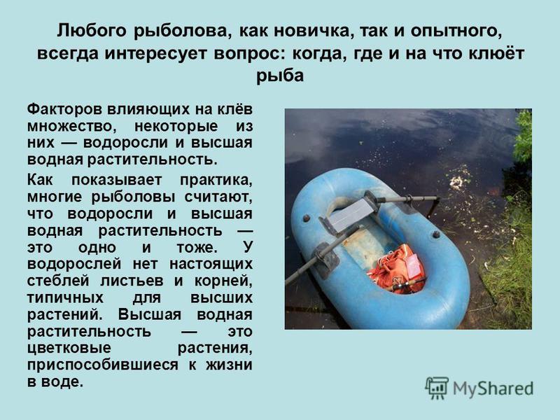 Любого рыболова, как новичка, так и опытного, всегда интересует вопрос: когда, где и на что клюёт рыба Факторов влияющих на клёв множество, некоторые из них водоросли и высшая водная растительность. Как показывает практика, многие рыболовы считают, ч