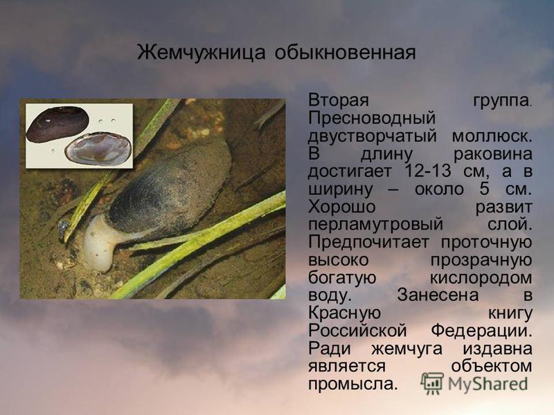 Жемчужница обыкновенная Вторая группа. Пресноводный двустворчатый моллюск. В длину раковина достигает 12-13 см, а в ширину – около 5 см. Хорошо развит перламутровый слой. Предпочитает проточную высоко прозрачную богатую кислородом воду. Занесена в Кр