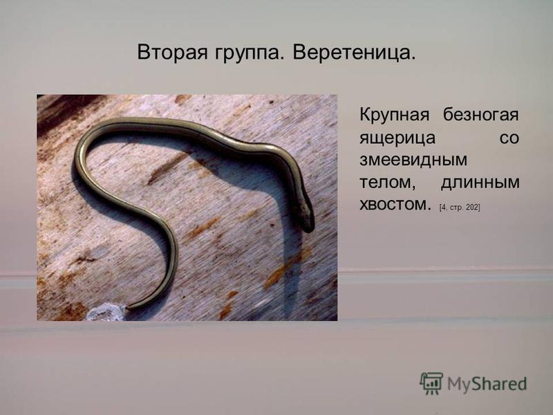 Вторая группа. Веретеница. Крупная безногая ящерица со змеевидным телом, длинным хвостом. [4, стр. 202]