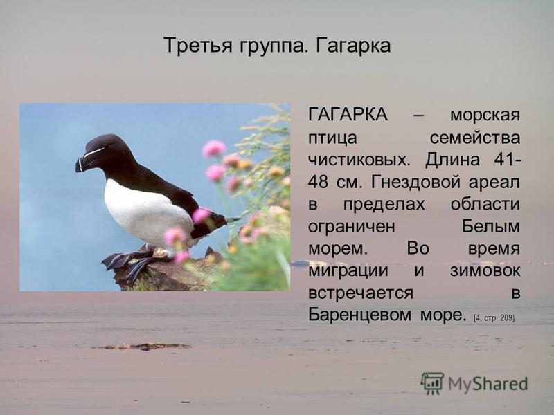 Третья группа. Гагарка ГАГАРКА – морская птица семейства чистиковых. Длина 41- 48 см. Гнездовой ареал в пределах области ограничен Белым морем. Во время миграции и зимовок встречается в Баренцевом море. [4, стр. 209]