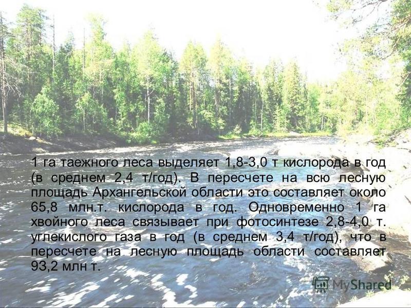 1 га таежного леса выделяет 1,8-3,0 т кислорода в год (в среднем 2,4 т/год). В пересчете на всю лесную площадь Архангельской области это составляет около 65,8 млн.т. кислорода в год. Одновременно 1 га хвойного леса связывает при фотосинтезе 2,8-4,0 т