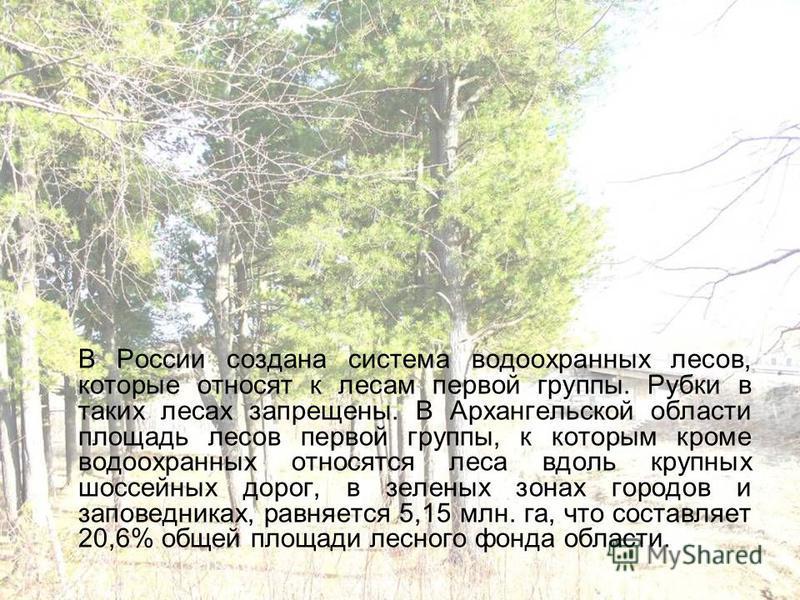 В России создана система водоохранных лесов, которые относят к лесам первой группы. Рубки в таких лесах запрещены. В Архангельской области площадь лесов первой группы, к которым кроме водоохранных относятся леса вдоль крупных шоссейных дорог, в зелен