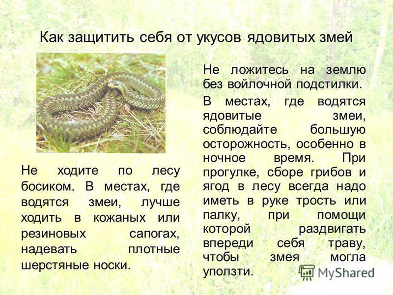Как защитить себя от укусов ядовитых змей Не ложитесь на землю без войлочной подстилки. В местах, где водятся ядовитые змеи, соблюдайте большую осторожность, особенно в ночное время. При прогулке, сборе грибов и ягод в лесу всегда надо иметь в руке т