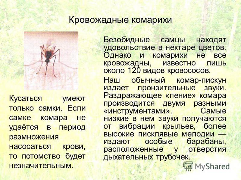Кровожадные комарихи Безобидные самцы находят удовольствие в нектаре цветов. Однако и комарихи не все кровожадны, известно лишь около 120 видов кровососов. Наш обычный комар-пискун издает пронзительные звуки. Раздражающее «пение» комара производится