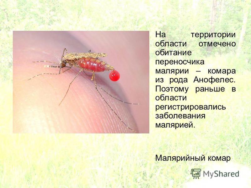 На территории области отмечено обитание переносчика малярии – комара из рода Анофелес. Поэтому раньше в области регистрировались заболевания малярией. Малярийный комар