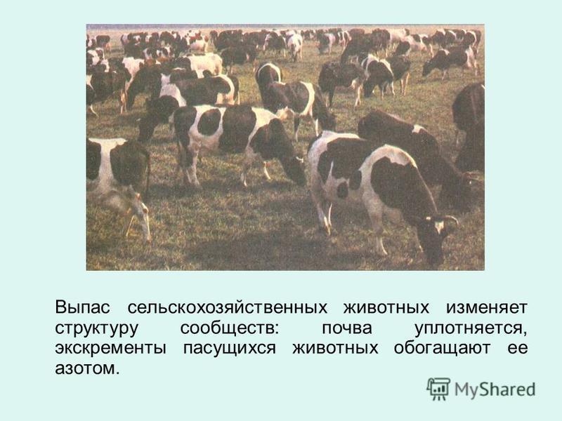 Выпас сельскохозяйственных животных изменяет структуру сообществ: почва уплотняется, экскременты пасущихся животных обогащают ее азотом.