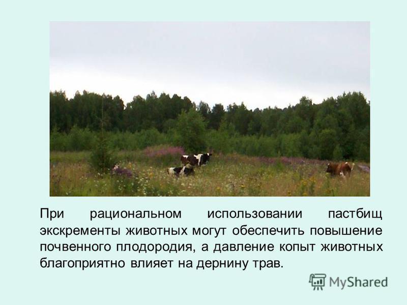При рациональном использовании пастбищ экскременты животных могут обеспечить повышение почвенного плодородия, а давление копыт животных благоприятно влияет на дернину трав.