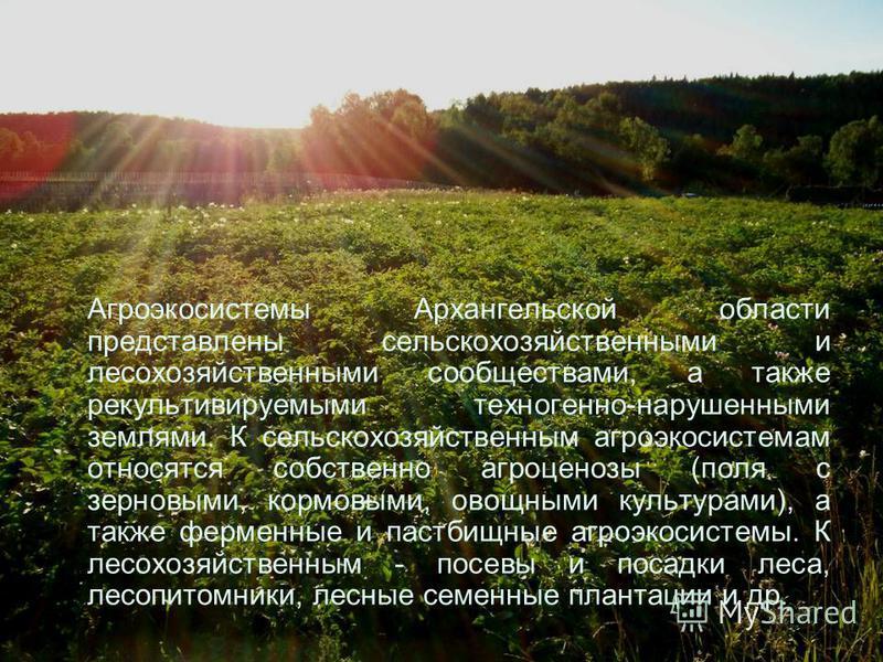 Агроэкосистемы Архангельской области представлены сельскохозяйственными и лесохозяйственными сообществами, а также рекультивируемыми техногенной-нарушенными землями. К сельскохозяйственным агроэкосистемам относятся собственно агроценозы (поля с зерно
