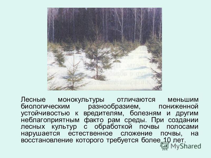 Лесные монокультуры отличаются меньшим биологическим разнообразием, пониженной устойчивостью к вредителям, болезням и другим неблагоприятным факто рам среды. При создании лесных культур с обработкой почвы полосами нарушается естественное сложение поч
