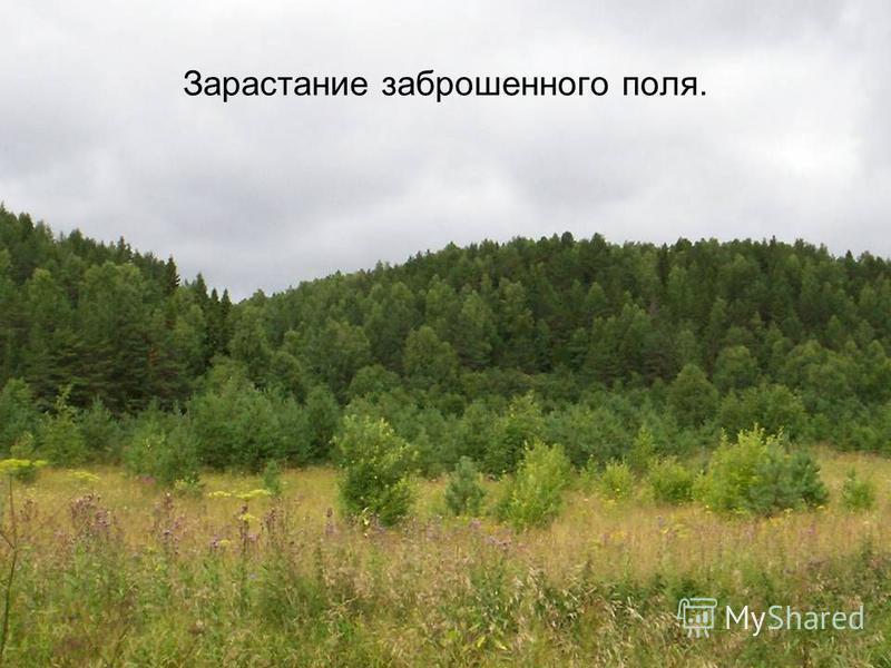 Зарастание заброшенного поля.