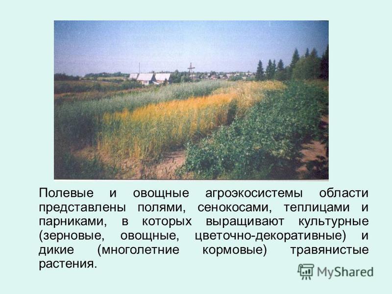 Полевые и овощные агроэкосистемы области представлены полями, сенокосами, теплицами и парниками, в которых выращивают культурные (зерновые, овощные, цветочно-декоративные) и дикие (многолетние кормовые) травянистые растения.