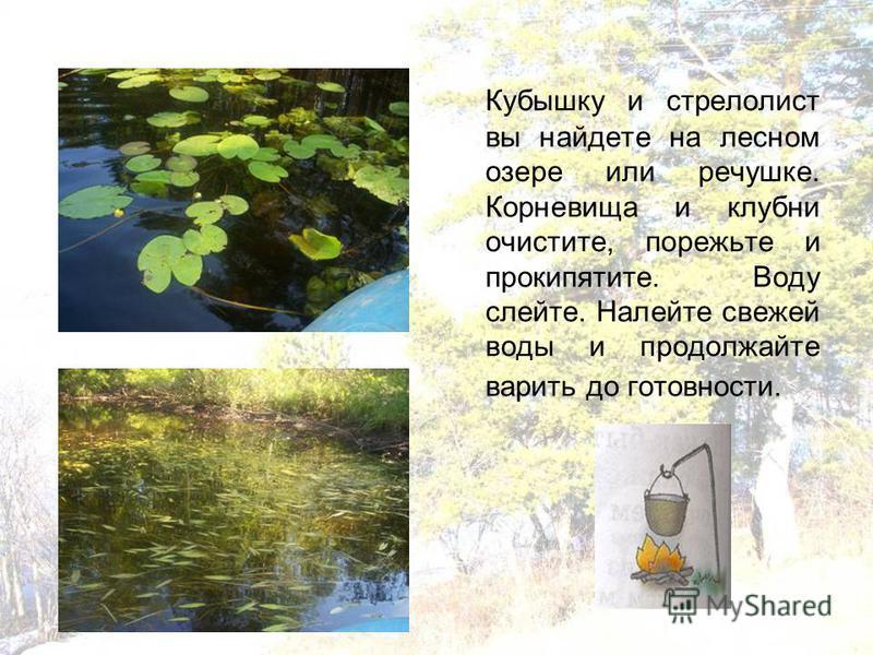 Кубышку и стрелолист вы найдете на лесном озере или речушке. Корневища и клубни очистите, порежьте и прокипятите. Воду слейте. Налейте свежей воды и продолжайте варить до готовности.