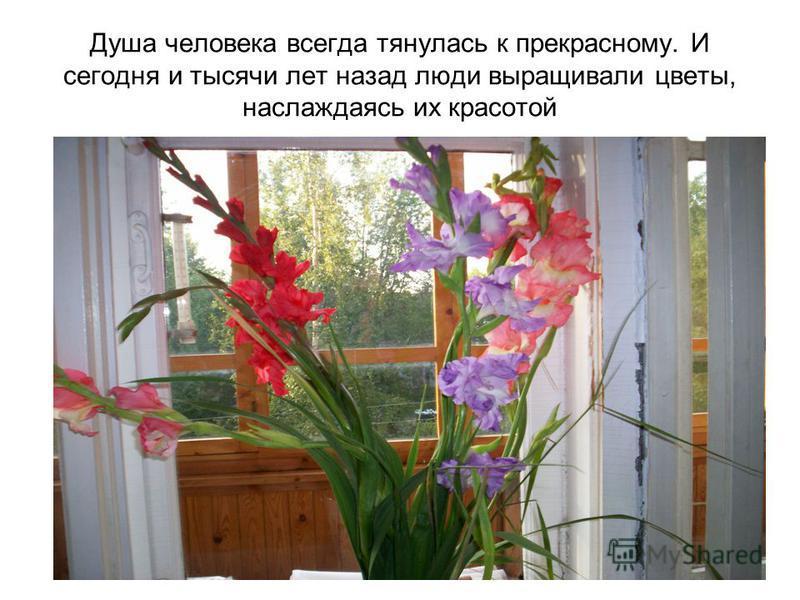 Душа человека всегда тянулась к прекрасному. И сегодня и тысячи лет назад люди выращивали цветы, наслаждаясь их красотой