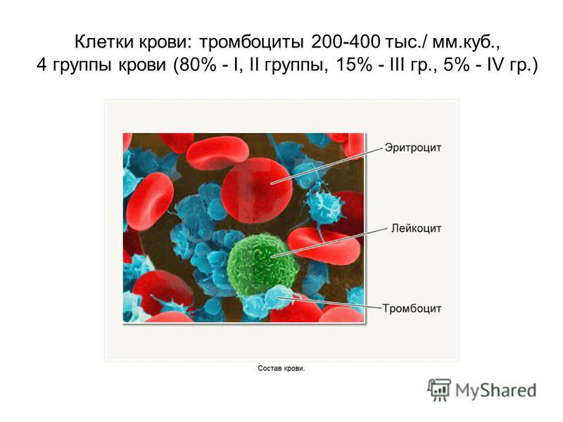 Клетки крови: тромбоциты 200-400 тыс./ мм.куб., 4 группы крови (80% - I, II группы, 15% - III гр., 5% - IV гр.)