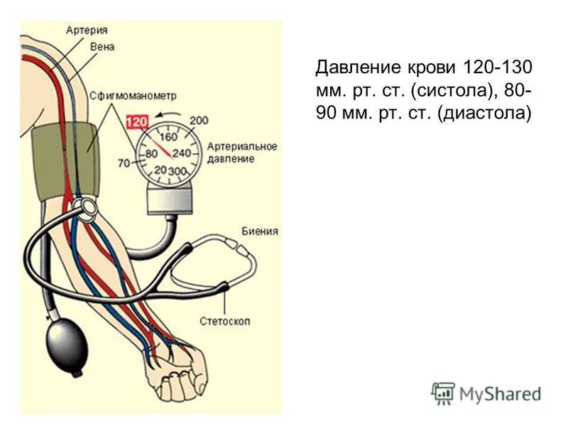 Давление крови 120-130 мм. рт. ст. (систола), 80- 90 мм. рт. ст. (диастола)