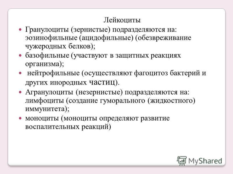 Лейкоциты Гранулоциты (зернистые) подразделяются на: эозинофильные (ацидофильные) (обезвреживание чужеродных белков); базофильные (участвуют в защитных реакциях организма); нейтрофильные (осуществляют фагоцитоз бактерий и других инородных частиц ). А