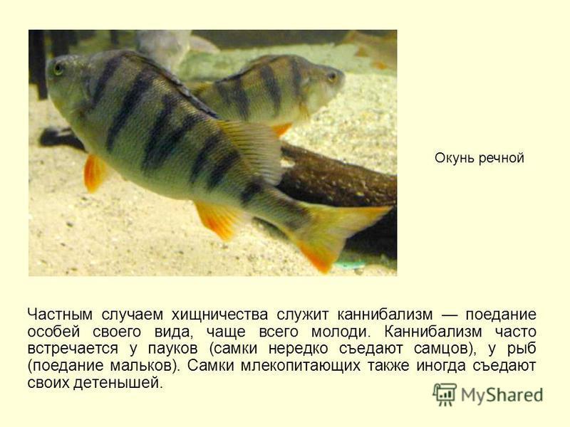 Частным случаем хищничества служит каннибализм поедание особей своего вида, чаще всего молоди. Каннибализм часто встречается у пауков (самки нередко съедают самцов), у рыб (поедание мальков). Самки млекопитающих также иногда съедают своих детенышей.