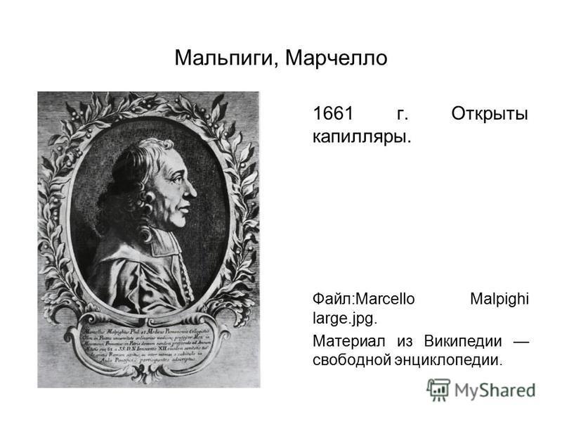 Мальпиги, Марчелло 1661 г. Открыты капилляры. Файл:Marcello Malpighi large.jpg. Материал из Википедии свободной энциклопедии.