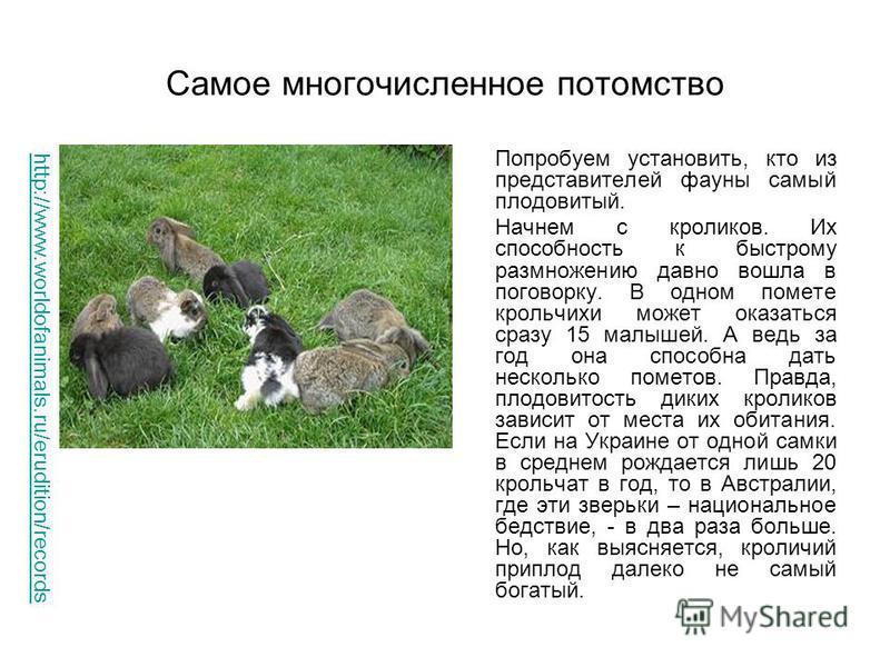 Самое многочисленное потомство Попробуем установить, кто из представителей фауны самый плодовитый. Начнем с кроликов. Их способность к быстрому размножению давно вошла в поговорку. В одном помете крольчихи может оказаться сразу 15 малышей. А ведь за