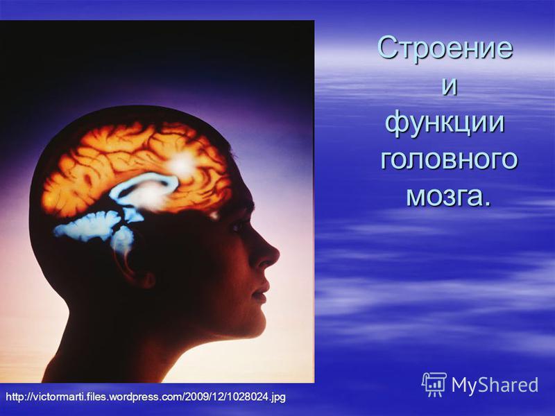 Строение и функции головного мозга. http://victormarti.files.wordpress.com/2009/12/1028024.jpg