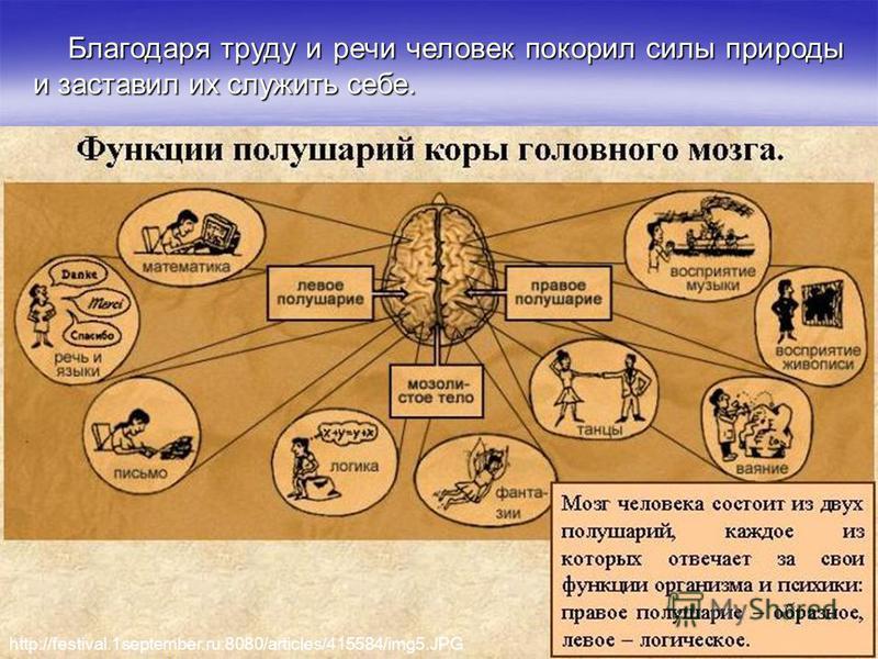 Благодаря труду и речи человек покорил силы природы и заставил их служить себе. http://festival.1september.ru:8080/articles/415584/img5.JPG