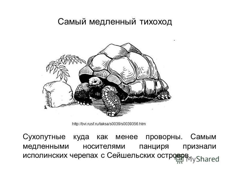 Самый медленный тихоход Сухопутные куда как менее проворны. Самым медленными носителями панциря признали исполинских черепах с Сейшельских островов. http://bvi.rusf.ru/taksa/s0039/s0039356.htm