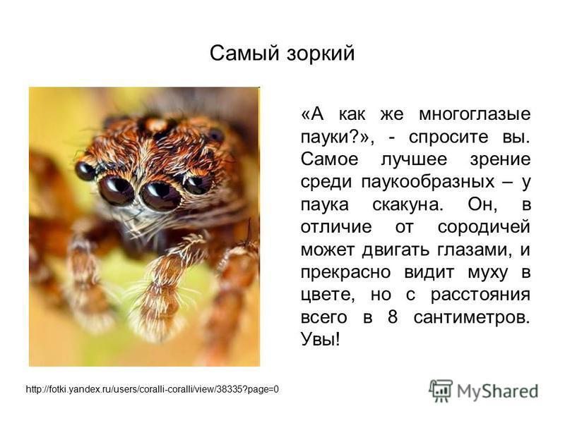 Самый зоркий «А как же многоглазые пауки?», - спросите вы. Самое лучшее зрение среди паукообразных – у паука скакуна. Он, в отличие от сородичей может двигать глазами, и прекрасно видит муху в цвете, но с расстояния всего в 8 сантиметров. Увы! http:/