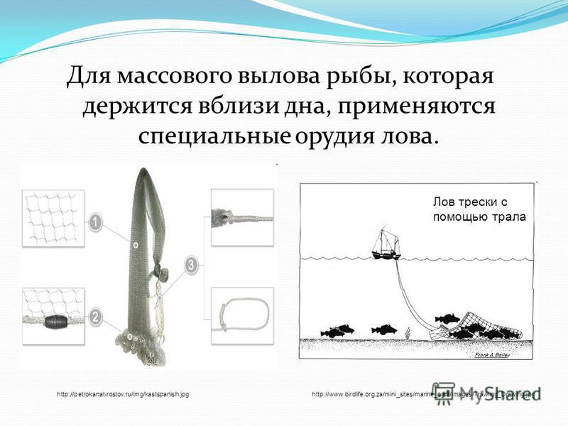 Для массового вылова рыбы, которая держится вблизи дна, применяются специальные орудия лова. http://petrokanat-rostov.ru/img/kastspanish.jpghttp://www.birdlife.org.za/mini_sites/marine_pgm/images/Trawling_Drawing.jpg Лов трески с помощью трала