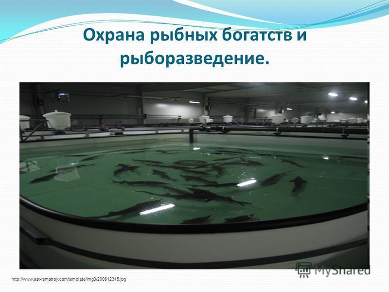 Охрана рыбных богатств и рыборазведение. http://www.ast-remstroy.com/template/img3/200812315.jpg