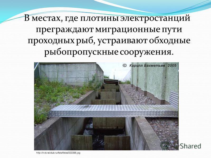 В местах, где плотины электростанций преграждают миграционные пути проходных рыб, устраивают обходные рыбопропускные сооружения. http://kvb.railclub.ru/foto/fotos/000396.jpg