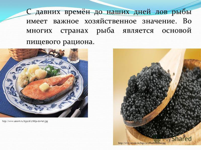 С давних времён до наших дней лов рыбы имеет важное хозяйственное значение. Во многих странах рыба является основой пищевого рациона. http://www.1zoom.ru/big2/16/176651-dorren.jpg http://www.1zoom.ru/big2/52/188481-dorren.jpg