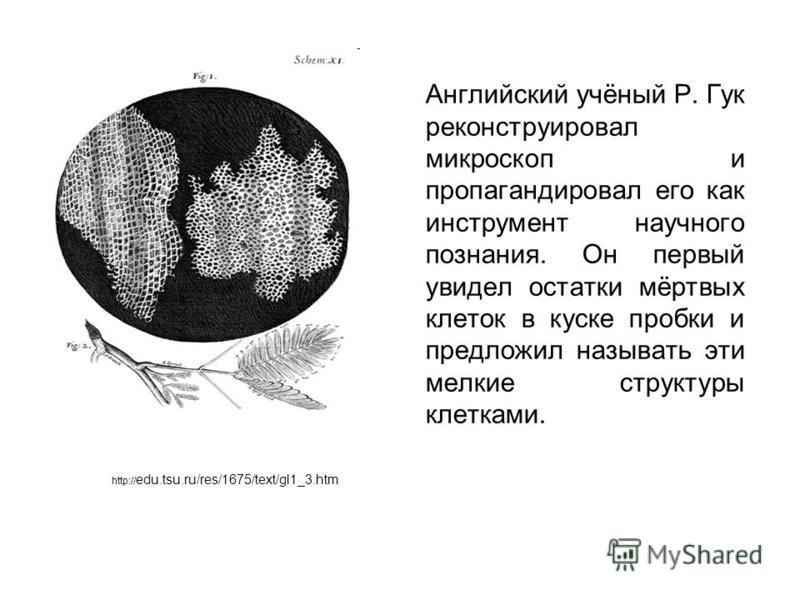 Английский учёный Р. Гук реконструировал микроскоп и пропагандировал его как инструмент научного познания. Он первый увидел остатки мёртвых клеток в куске пробки и предложил называть эти мелкие структуры клетками. http:// edu.tsu.ru/res/1675/text/gl1