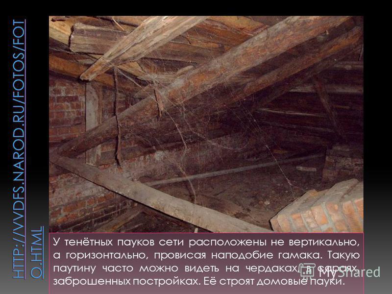 У тенётных пауков сети расположены не вертикально, а горизонтально, провисая наподобие гамака. Такую паутину часто можно видеть на чердаках, в сараях, заброшенных постройках. Её строят домовые пауки.