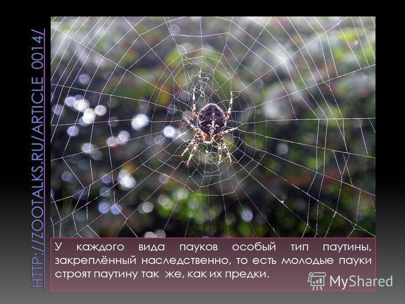 У каждого вида пауков особый тип паутины, закреплённый наследственно, то есть молодые пауки строят паутину так же, как их предки.