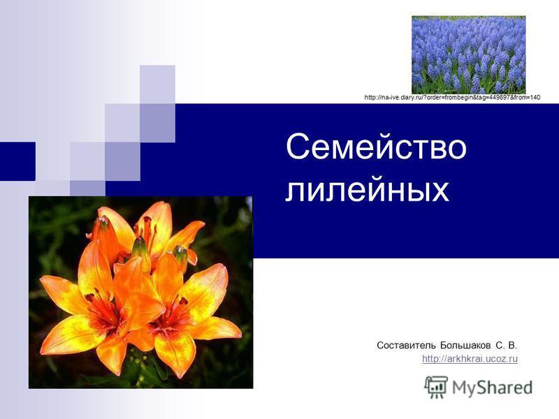 Семейство лилейных Составитель Большаков С. В. http://arkhkrai.ucoz.ru http://na-ive.diary.ru/?order=frombegin&tag=449697&from=140