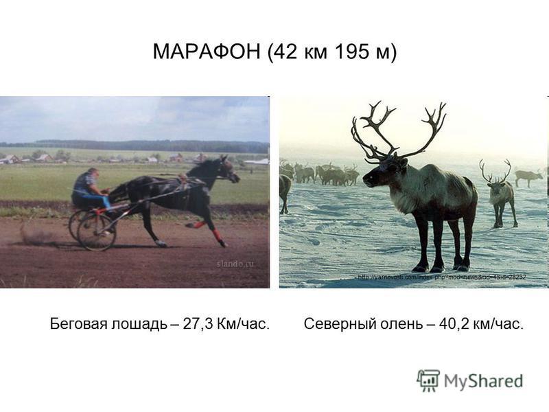 МАРАФОН (42 км 195 м) Беговая лошадь – 27,3 Км/час. Северный олень – 40,2 км/час. http://yarnovosti.com/index.php?mod=news&cid=4&id=28232