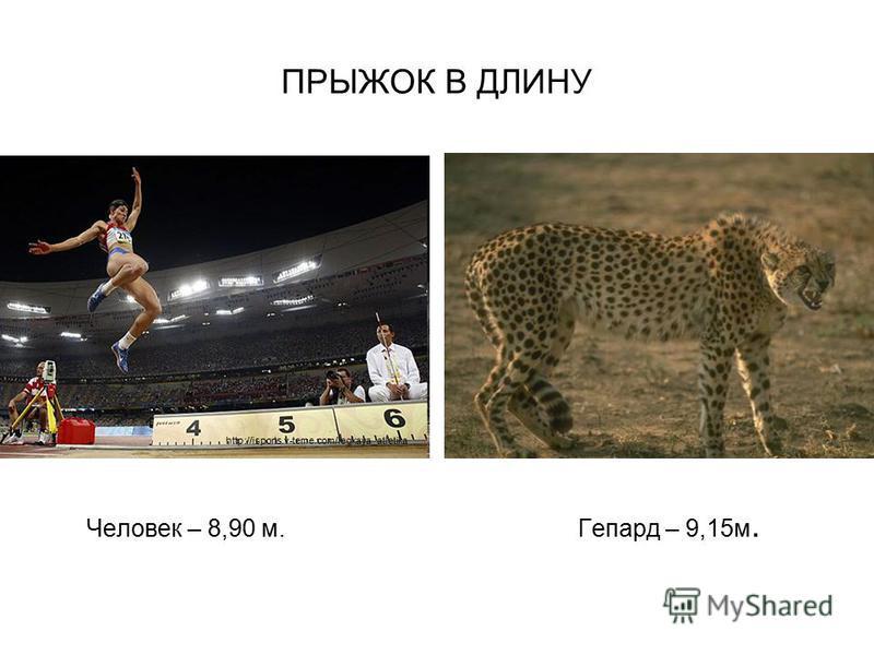 ПРЫЖОК В ДЛИНУ Человек – 8,90 м. Гепард – 9,15 м. http://isports.v-teme.com/legkaya_atletika