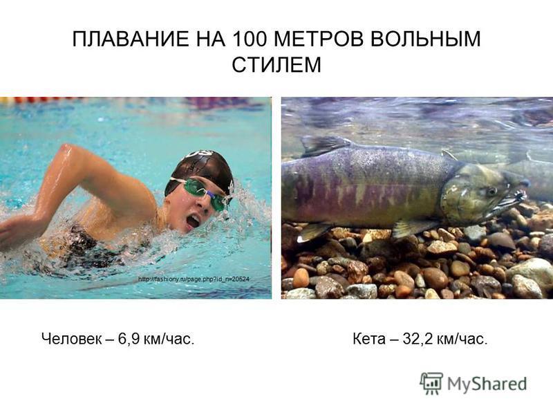 ПЛАВАНИЕ НА 100 МЕТРОВ ВОЛЬНЫМ СТИЛЕМ Человек – 6,9 км/час. Кета – 32,2 км/час. http://fashiony.ru/page.php?id_n=20524