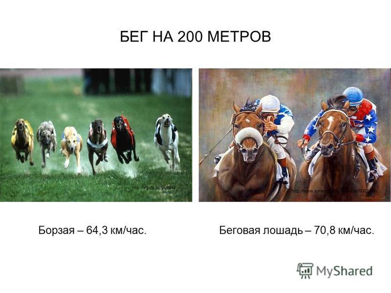 БЕГ НА 200 МЕТРОВ Борзая – 64,3 км/час. Беговая лошадь – 70,8 км/час. http://egida.by/publ/42 http://www.konevodstvo.ru/avatar/0002.htm