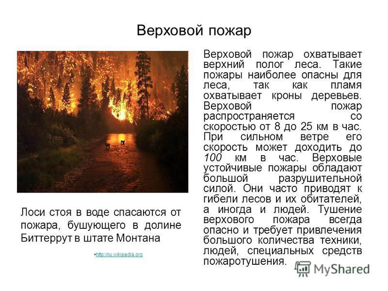 Верховой пожар охватывает верхний полог леса. Такие пожары наиболее опасны для леса, так как пламя охватывает кроны деревьев. Верховой пожар распространяется со скоростью от 8 до 25 км в час. При сильном ветре его скорость может доходить до 100 км в