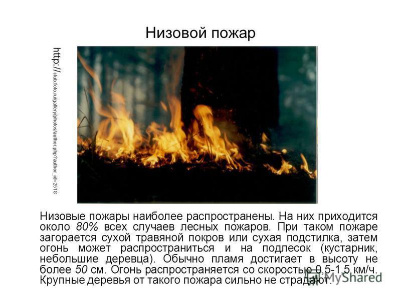 Низовые пожары наиболее распространены. На них приходится около 80% всех случаев лесных пожаров. При таком пожаре загорается сухой травяной покров или сухая подстилка, затем огонь может распространиться и на подлесок (кустарник, небольшие деревца). О