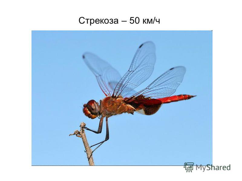 Стрекоза – 50 км/ч