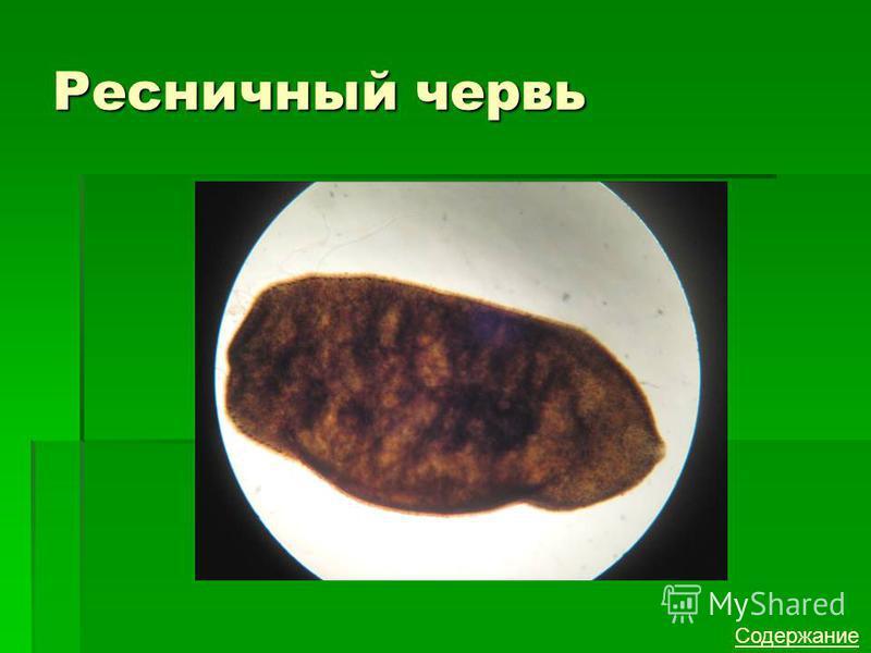 Ресничный червь Содержание