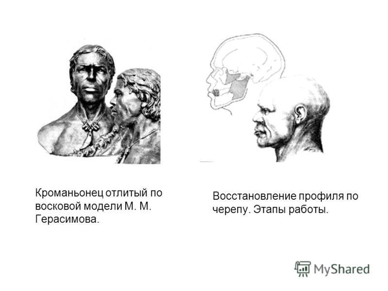 Кроманьонец отлитый по восковой модели М. М. Герасимова. Восстановление профиля по черепу. Этапы работы.