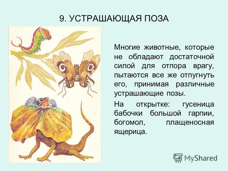 9. УСТРАШАЮЩАЯ ПОЗА Многие животные, которые не обладают достаточной силой для отпора врагу, пытаются все же отпугнуть его, принимая различные устрашающие позы. На открытке: гусеница бабочки большой гарпии, богомол, плащеносная ящерица.