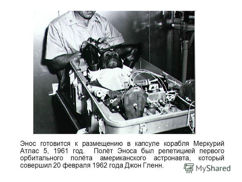 Энос готовится к размещению в капсуле корабля Меркурий Атлас 5, 1961 год. Полёт Эноса был репетицией первого орбитального полёта американского астронавта, который совершил 20 февраля 1962 года Джон Гленн.