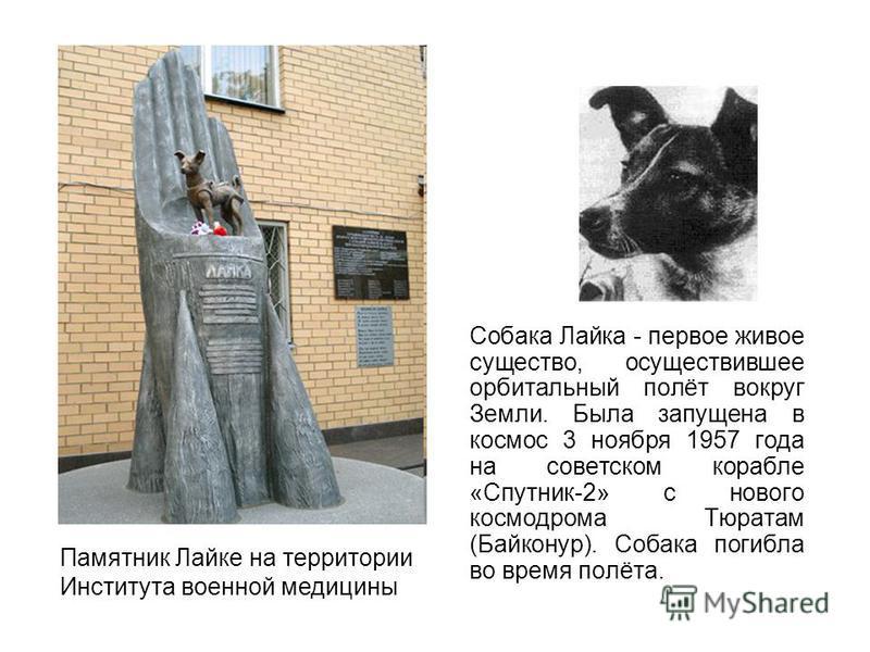 Собака Лайка - первое живое существо, осуществившее орбитальный полёт вокруг Земли. Была запущена в космос 3 ноября 1957 года на советском корабле «Спутник-2» с нового космодрома Тюратам (Байконур). Собака погибла во время полёта. Памятник Лайке на т