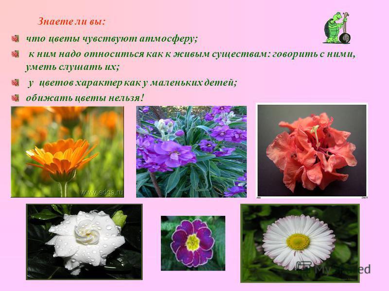 Знаете ли вы: что цветы чувствуют атмосферу; к ним надо относиться как к живым существам: говорить с ними, уметь слушать их; у цветов характер как у маленьких детей; обижать цветы нельзя!