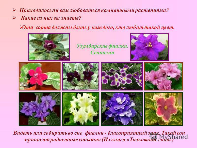 Приходилось ли вам любоваться комнатными растениями? Какие из них вы знаете? Узумбарские фиалки. Сенполии Эти сорта должны быть у каждого, кто любит такой цвет. Видеть или собирать во сне фиалки - благоприятный знак. Такой сон приносит радостные собы